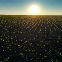 Secretaria de Defesa Agropecuária publica prazos para aprovação de processos