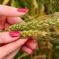 43% das mulheres se sentem representadas na agroindústria