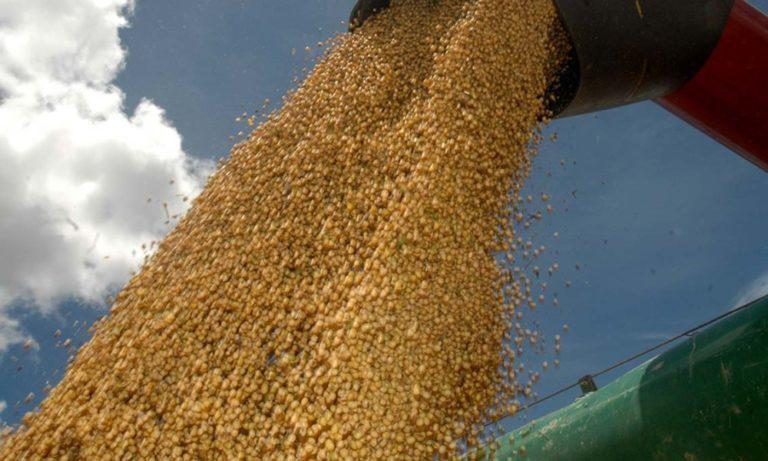 MT: safra de soja convencional deve ser uma das menores dos últimos anos