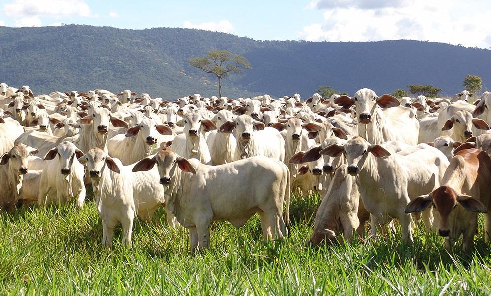 Pecuária brasileira está preparada para altas demandas de carne?