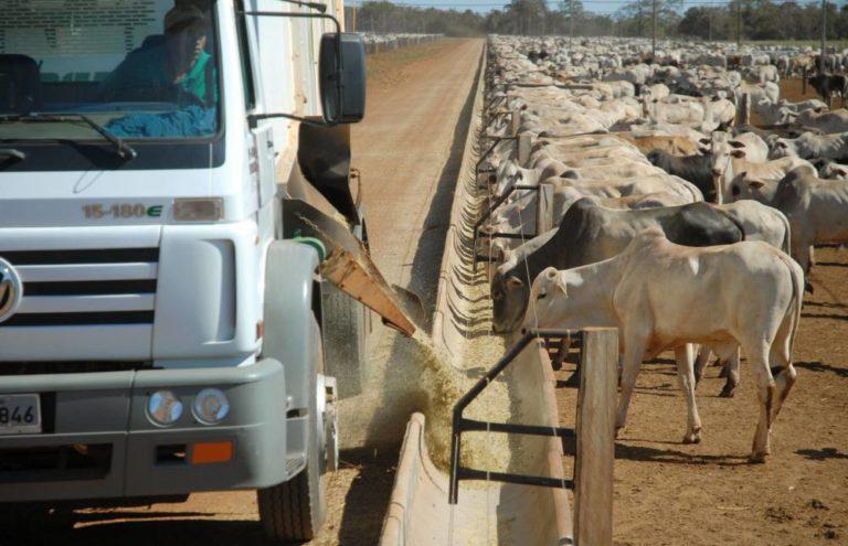 Confinamento intensivo tem ganho de até 2 quilos por dia em bovinos