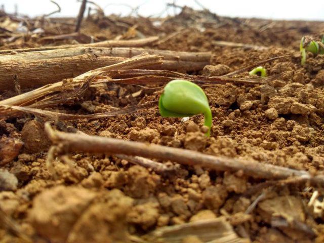 Área plantada com soja no Brasil deve crescer 2,5% em 20/21, aponta Datagro