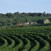 CNA levanta custos de produção de banana, café e grãos