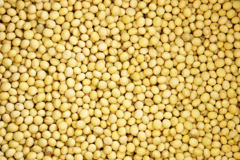 Soja: Brasil pode ter que importar 1 milhão de toneladas em 2020