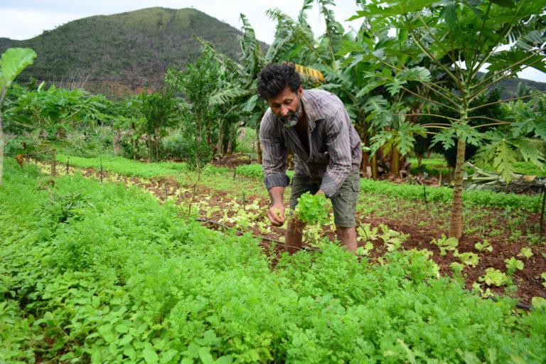 Agricultor familiar deve ser beneficiado com acordo entre Conab e OCB