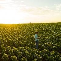 CNA analisa custo de produção da agropecuária na Bahia, Mato Grosso, Minas Gerais, Paraná e Sergipe