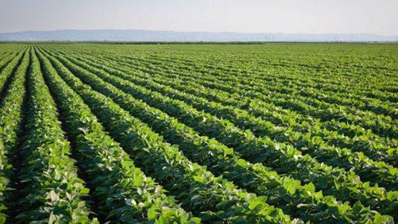 Área plantada com soja deve superar 10 milhões de ha em MT
