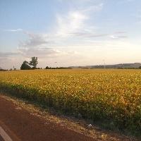 Brasil terá aumento de 5,4% na produção de grãos