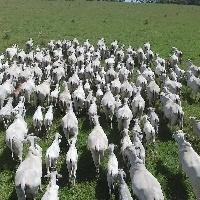 Brasil tem primeira carne carbono neutro