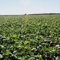 PIB do agro brasileiro cresceu 4,62%