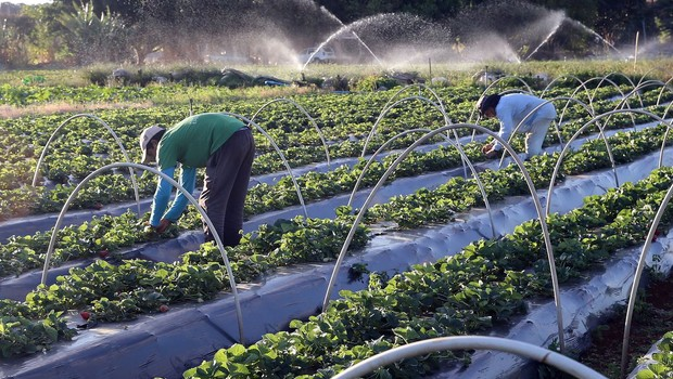 Área tratada com agroquímicos cresce 6% no Brasil no 1º semestre