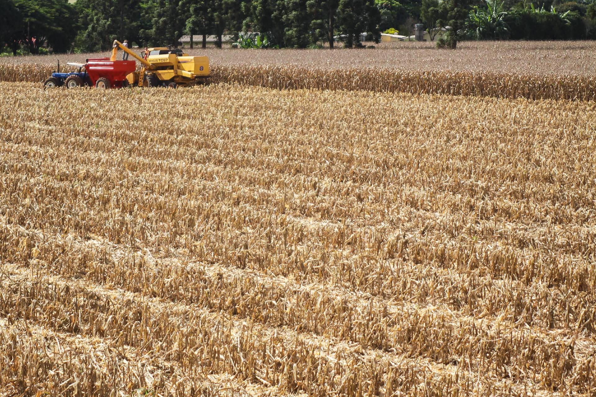 Boletim agropecuário destaca colheita do milho no Paraná