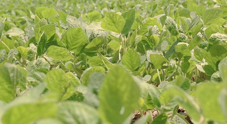 Pragas desafiam a produtividade da agricultura