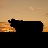 GO: cooperação entre Governo e Fundepec impulsiona a pecuária goiana
