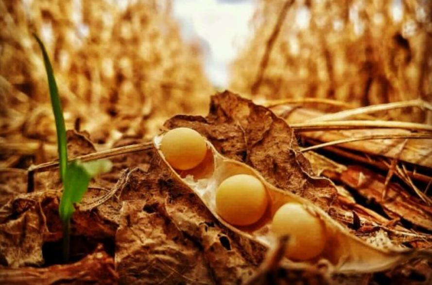 Plantio de soja começa em MT com mais de 50% da produção já vendida
